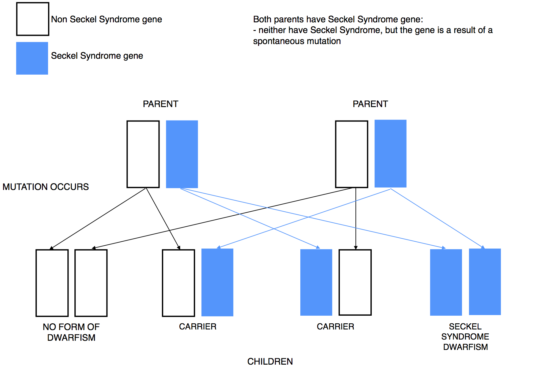 Dwarfism Genetics Seckel syndrome mutation recessive